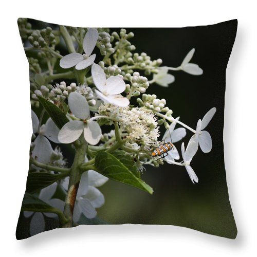 Ailanthus Throw Pillow featuring the photograph Ailanthus Webworm Moth 2 by Teresa Mucha