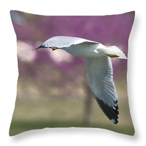 Roy Williams Throw Pillow featuring the photograph Airborne Seagull Series 3 by Roy Williams