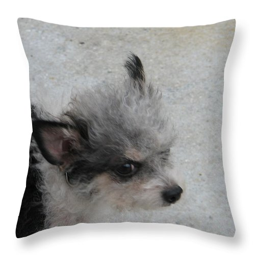 Puppy Throw Pillow featuring the photograph Airport Pup by Kelly Mezzapelle