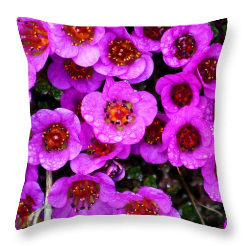 Flowers. Wild Flowers Throw Pillow featuring the photograph Alaskan Wild Flowers by Anthony Jones