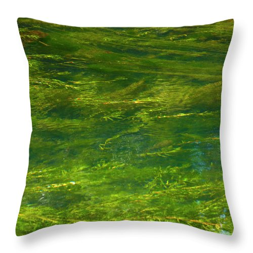 River Throw Pillow featuring the photograph Algae by Stefania Levi