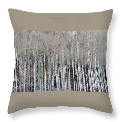 Aspen Trees Throw Pillow featuring the photograph All Aspen by Carol Sweetwood