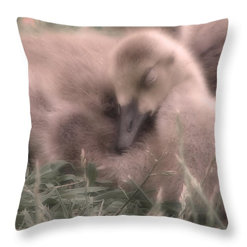 Goose Throw Pillow featuring the photograph All Is Right In My World by Kenneth Krolikowski