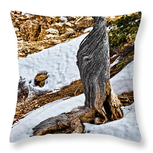 Tree Throw Pillow featuring the photograph All That Remains by Christopher Holmes