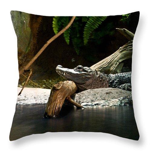 Alligator Throw Pillow featuring the photograph Allegator Resting by Douglas Barnett
