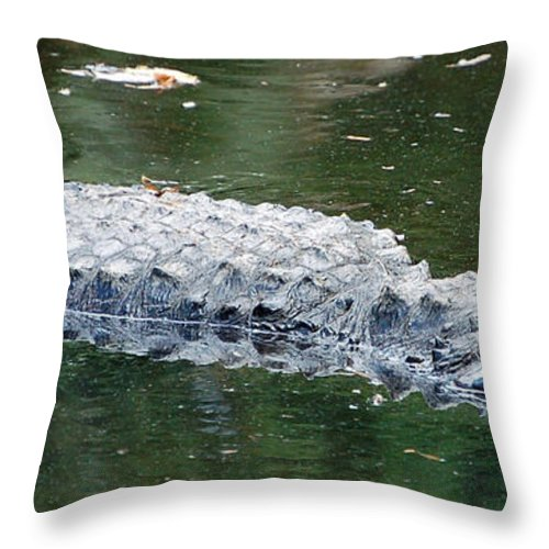 Gator Throw Pillow featuring the photograph Alligator Crawl by Donna Proctor