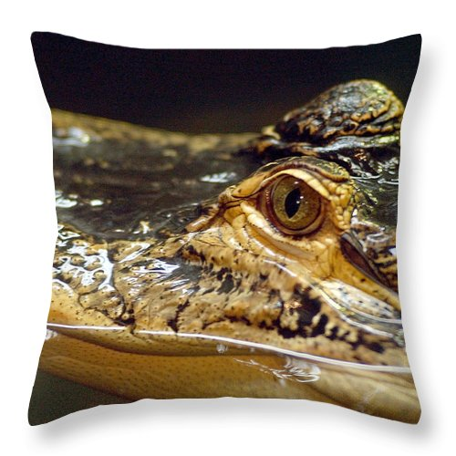 Alligator Throw Pillow featuring the photograph Alligator Eye Close Up by Steve Somerville