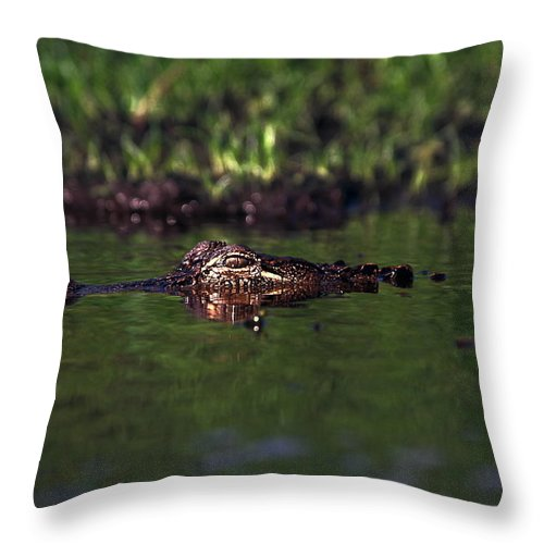 American Alligator Throw Pillow featuring the photograph Alligator Eyes by Sally Weigand