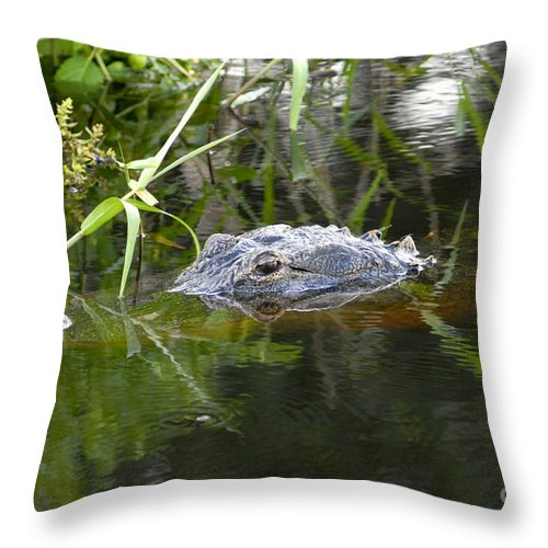 Alligator Throw Pillow featuring the photograph Alligator Hunting by David Lee Thompson
