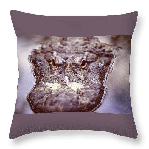 St. Augustine Rookery Throw Pillow featuring the photograph Alligator by Nicole Anderson
