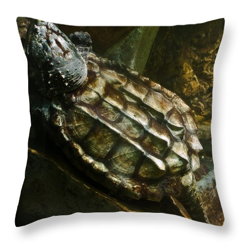 Alligator Throw Pillow featuring the photograph Alligator Snapping Turtle Macrochelys temminckii by Douglas Barnett