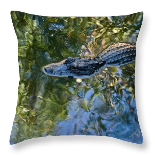 Alligator Throw Pillow featuring the photograph Alligator Stalking by Douglas Barnett