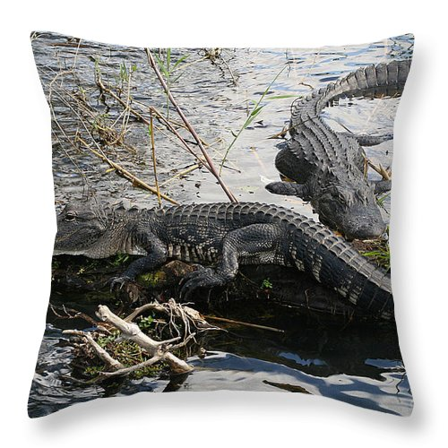 Alligator Throw Pillow featuring the photograph Alligators In An Everglades Swamp by Max Allen