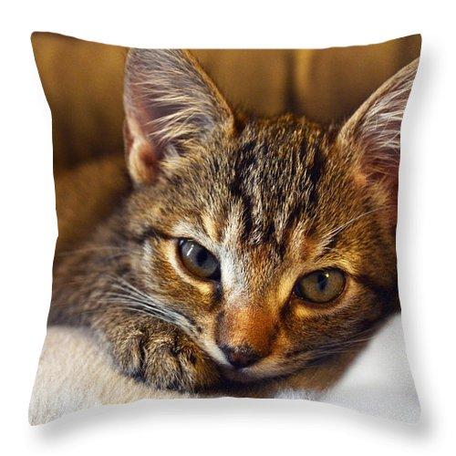 Cat Throw Pillow featuring the photograph Allura by Alyssa Faulkner