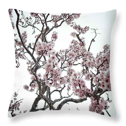 Almond Tree In Flower Throw Pillow featuring the photograph Almond Tree In Flower by Nelson Mineiro