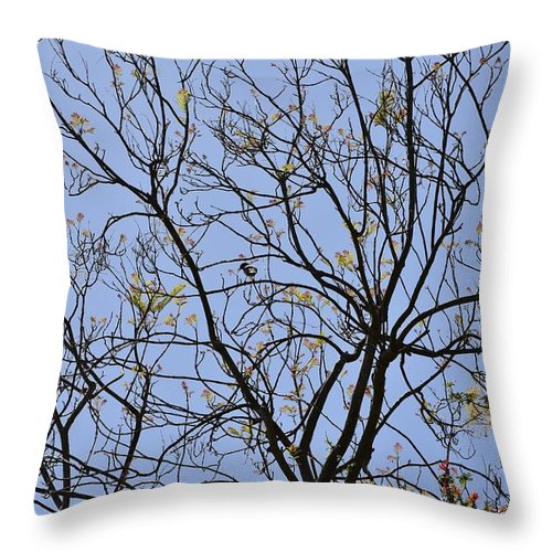 Linda Brody Throw Pillow featuring the photograph Almost Bare With Bird I by Linda Brody