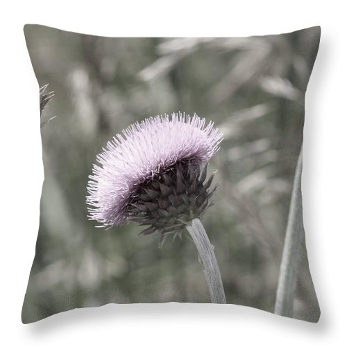 Thistle Throw Pillow featuring the photograph Almost Black And White Pale Purple Thistle Flower Photograph by Colleen Cornelius