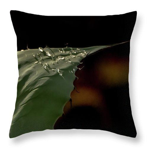 Aloe Throw Pillow featuring the photograph Aloe And Water Droplets by Tam Ryan