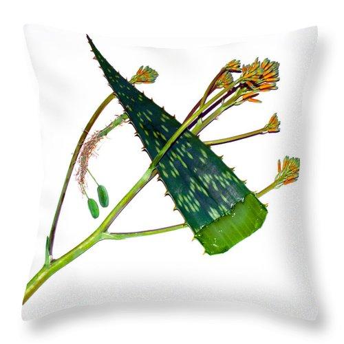 Aloe; Vera; Medicine; Properties; Medicinal; Ailments; Biblical; Ointment; Burns; Burn; Cuts; Rash; Throw Pillow featuring the photograph Aloe Vera by Allan Hughes