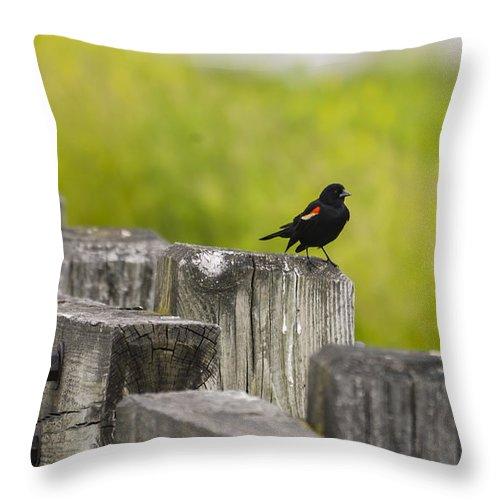 Blackbird Throw Pillow featuring the photograph Alone by Douglas Neumann