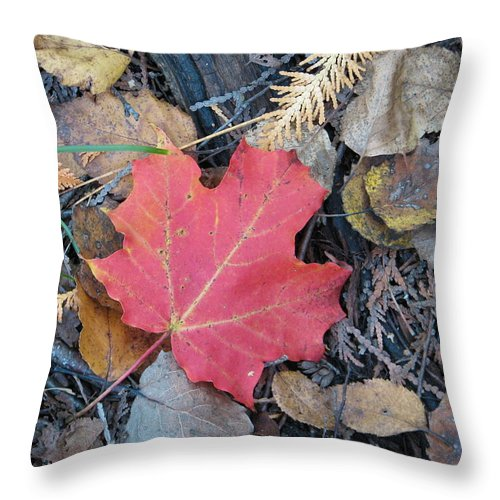 Leaves Throw Pillow featuring the photograph Alone In The Woods by Kelly Mezzapelle