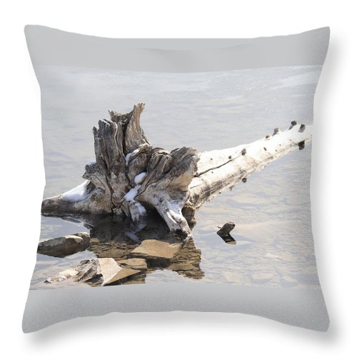 Tree Throw Pillow featuring the photograph Alone by Tiffany Vest