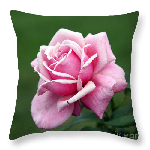 Rose Throw Pillow featuring the photograph Alone Time by Amanda Barcon