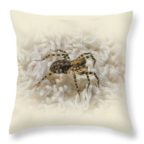 Spider Throw Pillow featuring the photograph Along Came A Spider by Mother Nature
