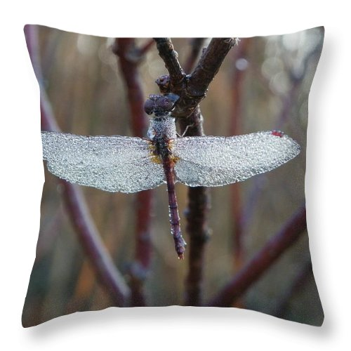 Insects Throw Pillow featuring the photograph Along Came A Spider by Peggy King