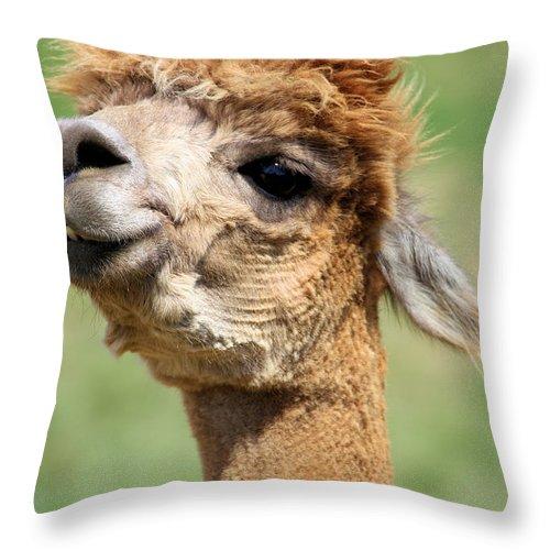 Alpaca Throw Pillow featuring the photograph Alpaca 1 by Denise Jenks