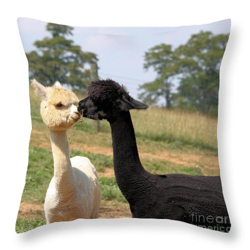 Kiss Throw Pillow featuring the photograph Alpaca Kiss by Denise Jenks