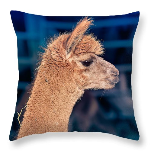 Alpaca Throw Pillow featuring the photograph Alpaca Wants To Meet You by TC Morgan
