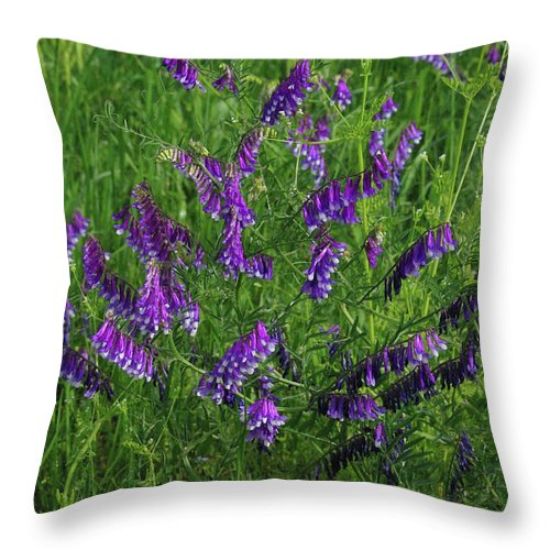 Wildflower Throw Pillow featuring the photograph Alpine Vetch by Robyn Stacey