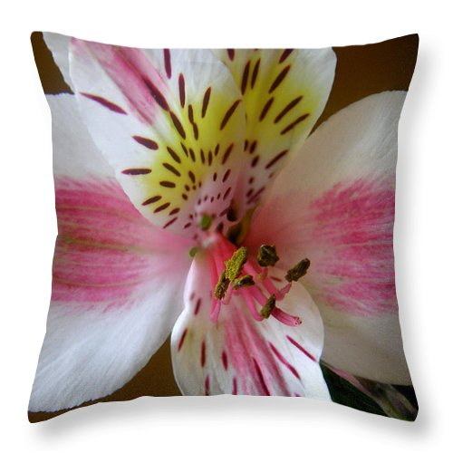 Nature Throw Pillow featuring the photograph Alstroemerias - Close by Lucyna A M Green