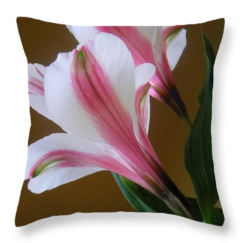 Nature Throw Pillow featuring the photograph Alstroemerias - Together by Lucyna A M Green