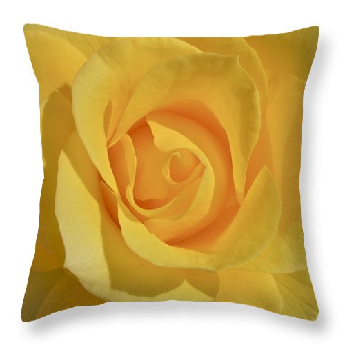Photograph Or Yellow Rose Throw Pillow featuring the photograph Amarillo by Gwyn Newcombe
