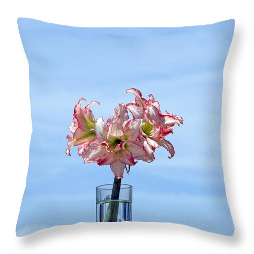 Amaryllis; Belladonna; Lily; Naked; Ladies; Lady; Florida; Spring; Sky; Bloom; Blooming. Flower; Blo Throw Pillow featuring the photograph Amaryillis Belladonna Against The Spring Florida Sky by Allan Hughes
