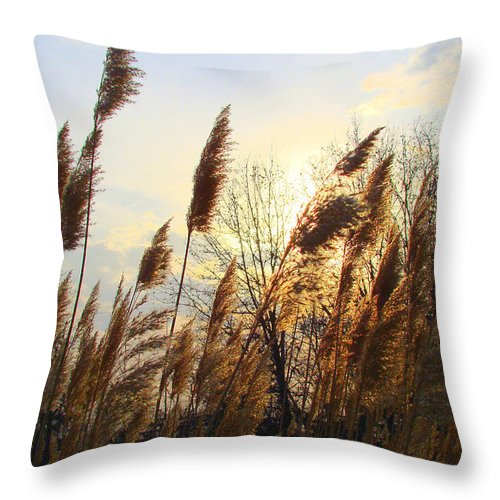 Pampasgrass Throw Pillow featuring the photograph Amber Waves Of Pampas Grass by J R Seymour