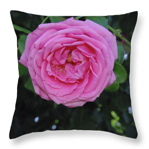 Flower Throw Pillow featuring the photograph America Climbing Rose by Robyn Stacey