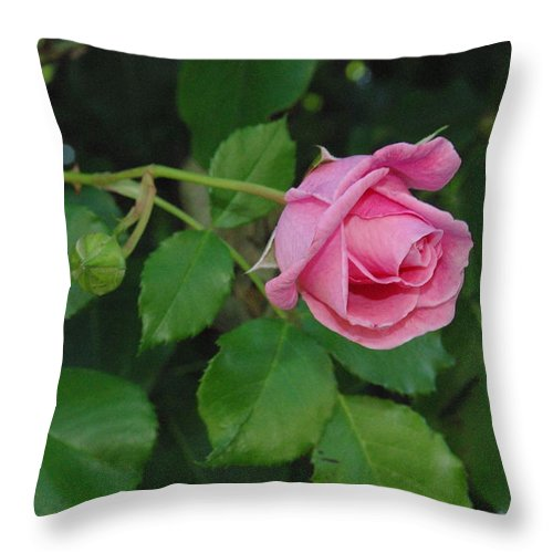 Flower Throw Pillow featuring the photograph America Climbing Rosebud by Robyn Stacey