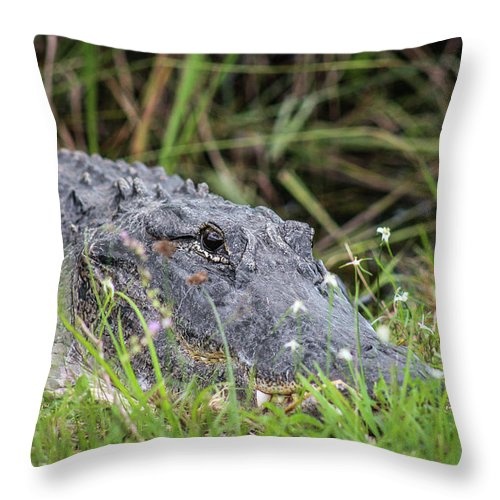 Daytime Throw Pillow featuring the photograph American Alligator by Scott Dry
