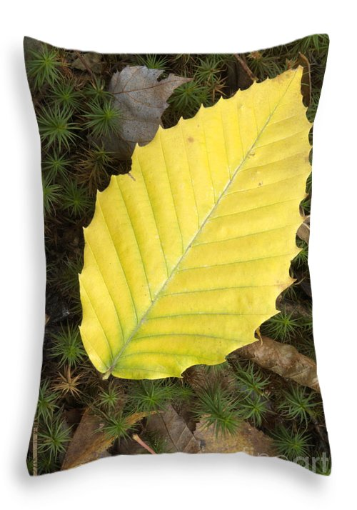 Autumn Throw Pillow featuring the photograph American Beech Leaf by Erin Paul Donovan
