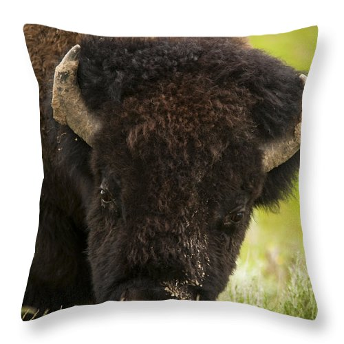 Bison Throw Pillow featuring the photograph American Bison by Chad Davis