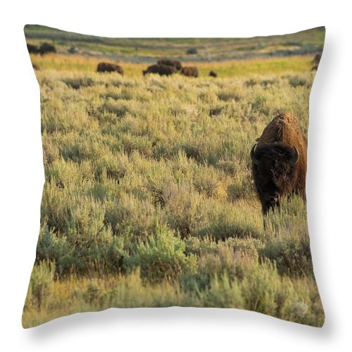 American Bison Throw Pillow featuring the photograph American Bison by Sebastian Musial