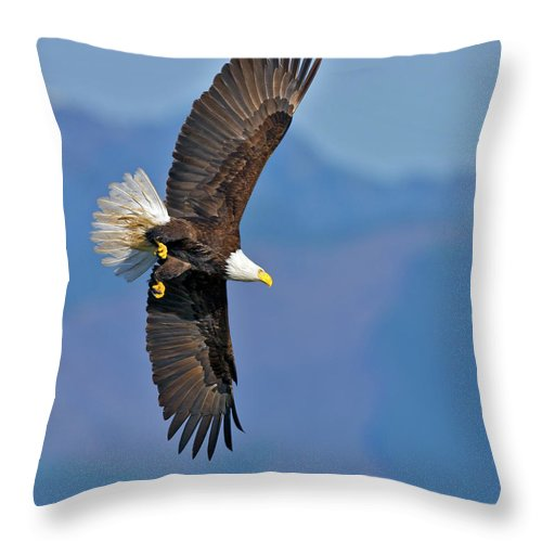 American Throw Pillow featuring the photograph American Blad Eagle On The Wing by Gary Langley