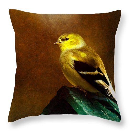 Finch Throw Pillow featuring the photograph American Gold Finch In Texture by Lana Trussell