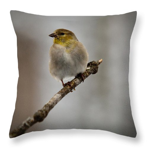 American Throw Pillow featuring the photograph American Golden Finch Winter Plumage by Douglas Barnett