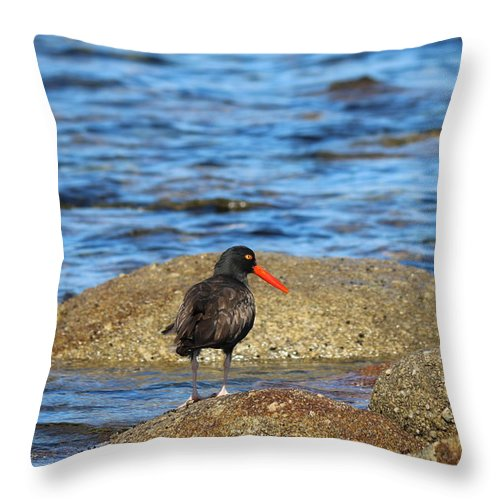 Oystercatcher Throw Pillow featuring the photograph American Oystercatcher by Christy Pooschke