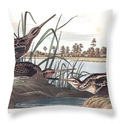 American Snipe Throw Pillow featuring the painting American Snipe by MotionAge Designs