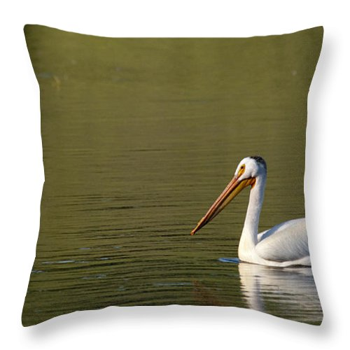 Pelican Throw Pillow featuring the photograph American White Pelican by Chad Davis